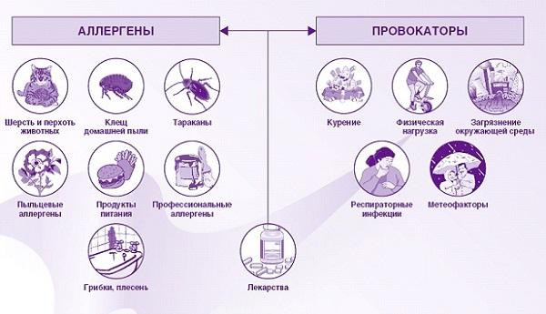 Аллергены и провокаторы