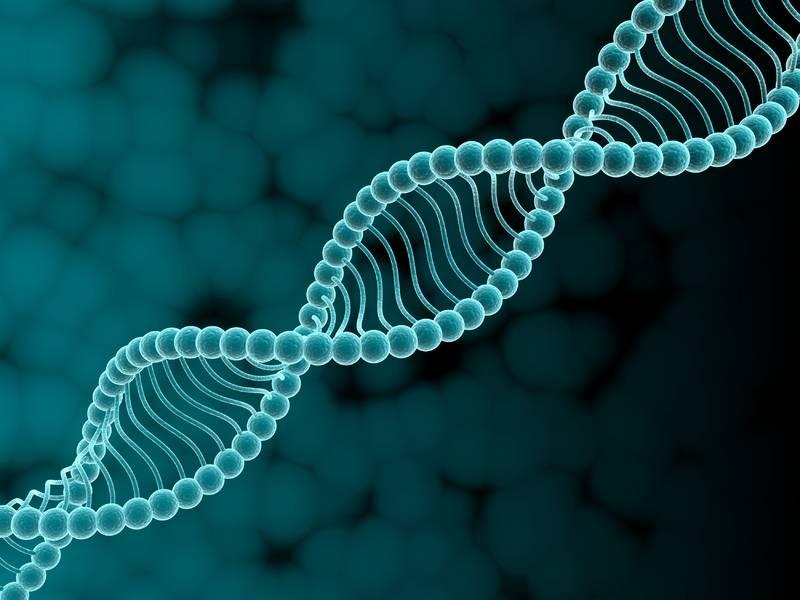 днк ген